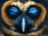 Night Owl, or Night, Night Owl?