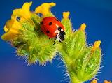 ☺♥ Ladybird...