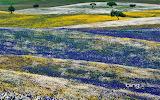 Spring flowers in Alentejo. Portugal