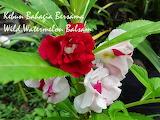 Multicolor keembung kebun bahagia bersama