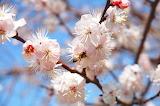 Spring-721960 1920