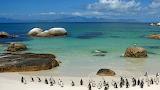 Penguins on beach - South Africa