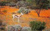 Desert bloom in South Africa