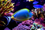 Colorful fish ii by xbiscuits-d41tf5g