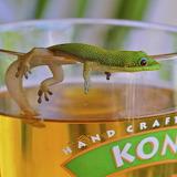 neugieriger Gecko