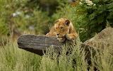 Animals wildlife nature (404)