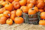 Carabasses - Pumpkins