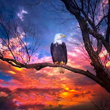 * Eagle Sunset...