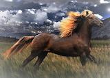 Horses - Rocky Mountain Horse