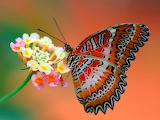 Butterfly wallpapers HD (25)
