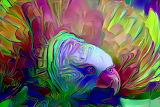 Fluffed Parrot