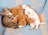 Trio of adorable