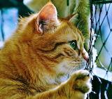 Katze am Zaun