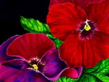 ☺♥ Pretty pansies...
