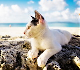 White cat at the coast
