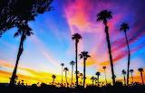 Palm Trees galore...