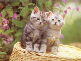 Funny Kittens...