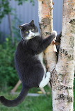 ~Just another treehugger!