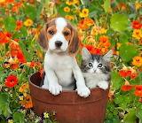 Puppy & kitty