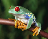 Frog FP