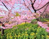 Japan- garden