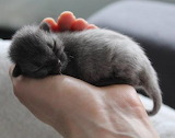 Newborn Kitten for T