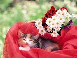 Kitten in Garden...