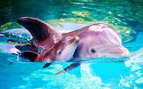 🐬I Love My Mommy...