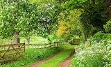 Countryside 2