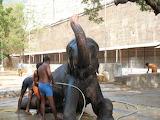 Rukku, our Elephant