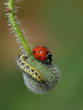 Lady Bug & Caterpillar