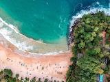 Aerial shot beach coast ocean trees