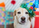 Colorful birthday dog by auricle99 from magic jigsaw puzzles