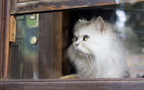 Cat-wooden-window-look