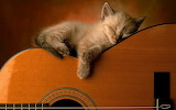 A cat sleeping on a guitar