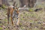 Different-types-of-photography-Wildlife-photography-700x467