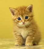 Little kitty...
