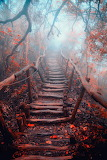 Stairs forest Taichung Taiwan