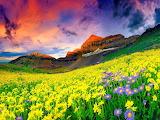 ☺ Flower field...