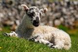 Basking in the Yorkshire Sun
