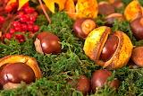 Chestnuts, berries, moss, autumn