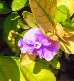 Flores502