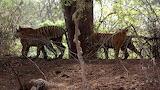 5c541fe299637-Nagarjunasagar Wildlife Sanctuary Sight Seeing Tou