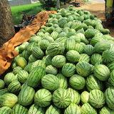 healthy food-watermelon