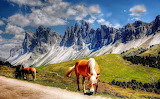 horses between the mountains