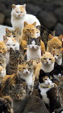 A Clutter Of Kitties