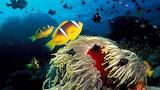 Tropical-fish-underwater-sea-life-undersea-life-coral-reef