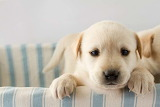 Impossibly-cute-puppy-3