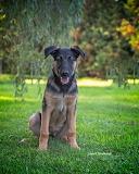 A Dog named Crickett 8933