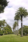 Open Spaces at Cornwall Park
